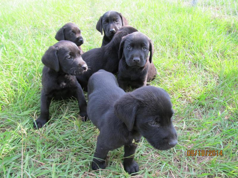 ... Random Photos Black Dog Breeds Toy Dog Breeds List Very Small Dog